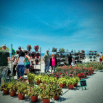 Plants For Sale Rockaway Beach Boardwalk Fair Queens